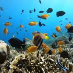 Moalboal Island Hopping Fishes