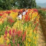 Sirao Flower Farm 0